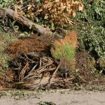 Garden waste for disposal