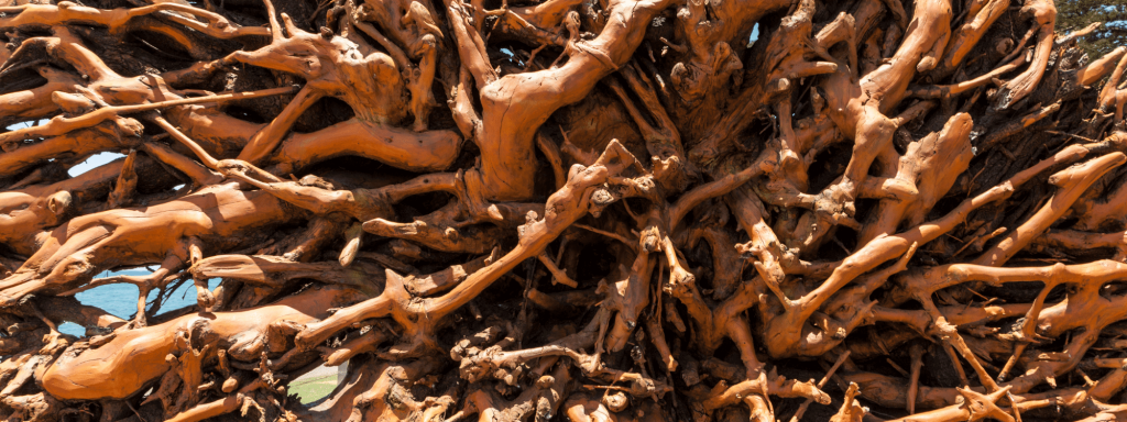 tree root recycling